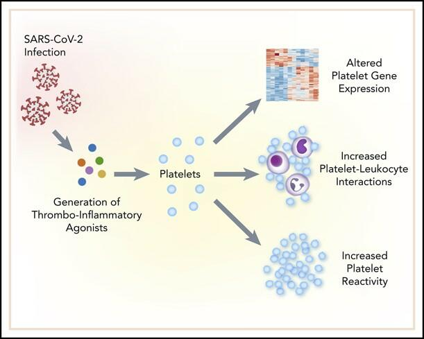 Viral Infections Alter Megakaryocyte and Platelet Gene Expression and Function. SARS-CoV-2 infection generations thromboinflammatory agonists which alter platelet gene expression and function to promote increased platelet-leukocyte aggregates and platelet reactivity.
