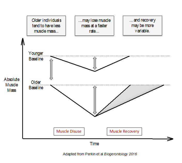 Graphic- Age-Related Sarcopenia and Recovery Following Muscle Disuse