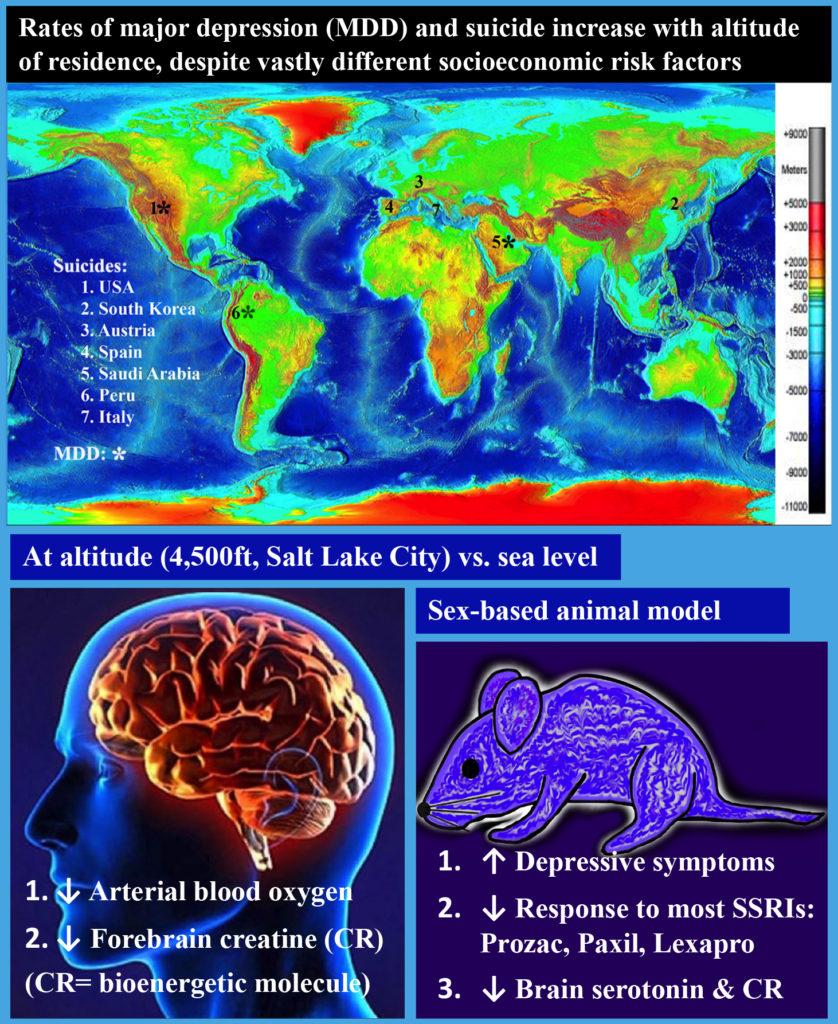 Graphic- Chronic Hypoxia Exposure Worsens Depression