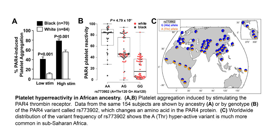 A Genetic Mechanism Graphic- Contributing to Racial Differences in Vascular Disease